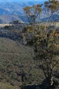 australian bush (2)