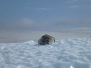 Antarctica 1341