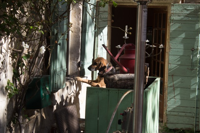 Dog ordering at cafe's kitchen window